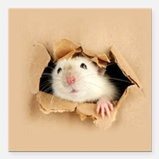 "Cute Hamster Square Car Magnet 3"" x 3"""