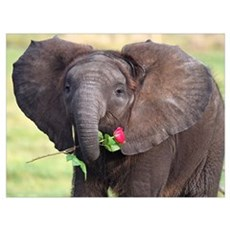 BABY ELEPHANT , LOVE Poster