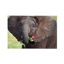BABY ELEPHANT , LOVE Rectangle Magnet