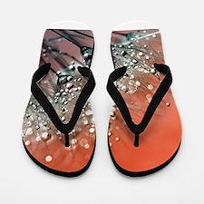 Dandelion_2015_0711 Flip Flops