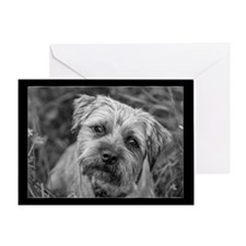 Border Terrier Dog Card Greeting Cards
