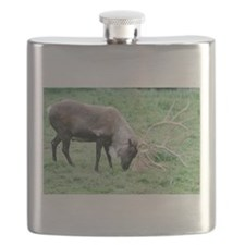 Caribou with Large Antlers Flask