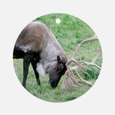 Caribou with Large Antlers Ornament (Round)