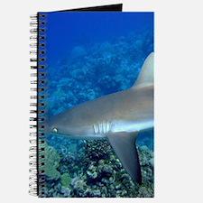 Grey Reef Shark Journal