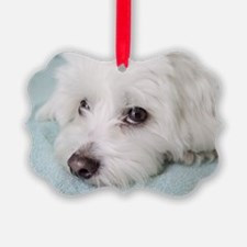 Cute Coton de tulear Ornament