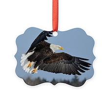 Cute Bald eagle maine Ornament