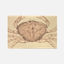 The Common Crab of the Pacific Coast Magnets