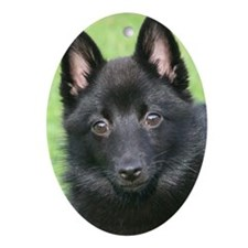 Puppy Love Oval Ornament