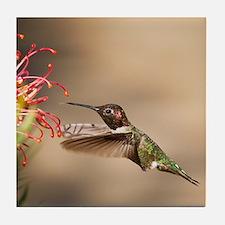 Cute Hummingbird Tile Coaster