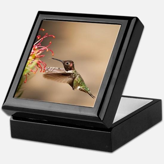 Cute Hummingbird Keepsake Box