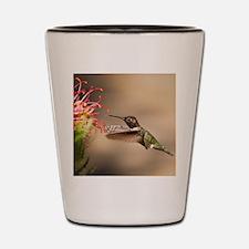 Cute Hummingbird Shot Glass