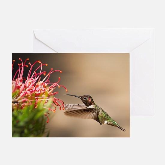 Cool Hummingbird Greeting Card