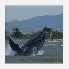 Humpback Whale Breaching by Windsurfe Tile Coaster