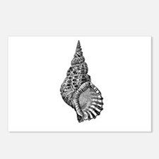 Black and white Conch shell Postcards (Package of