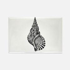 Black and white Conch shell Magnets