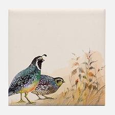 Watercolor Desert Gambel's Quail Tile Coaster