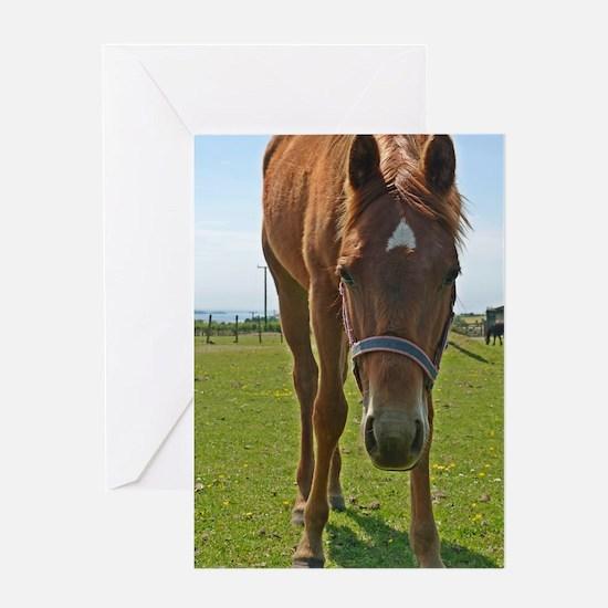 Horse Fancy - Original 6x9 - Greeting Cards