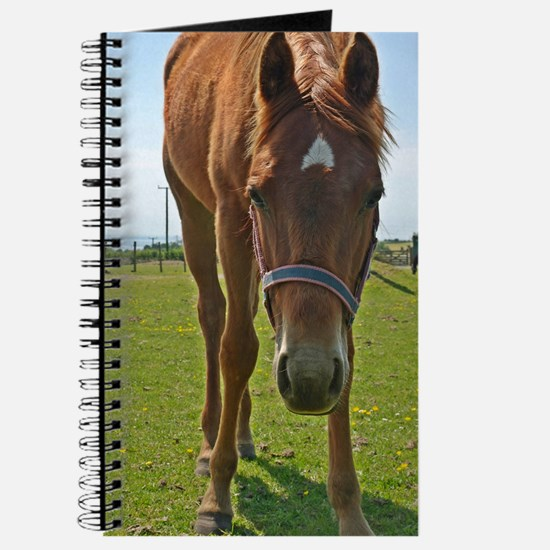 Horse Fancy - Original 6x9 - Journal