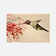 Annas Hummingbird Magnets