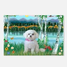 Birches / Maltese (R) Postcards (Package of 8)