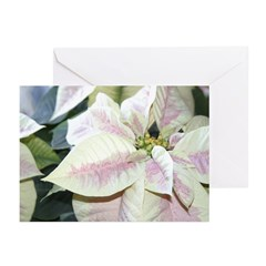 Poinsettia Greeting Cards (Pk of 10)