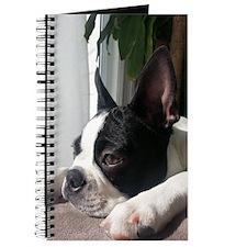 Thoughtful Boston Terrier Journal