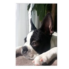 Thoughtful Boston Terrier Postcards (Package of 8)