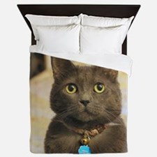 Cute Russian blue cat Queen Duvet
