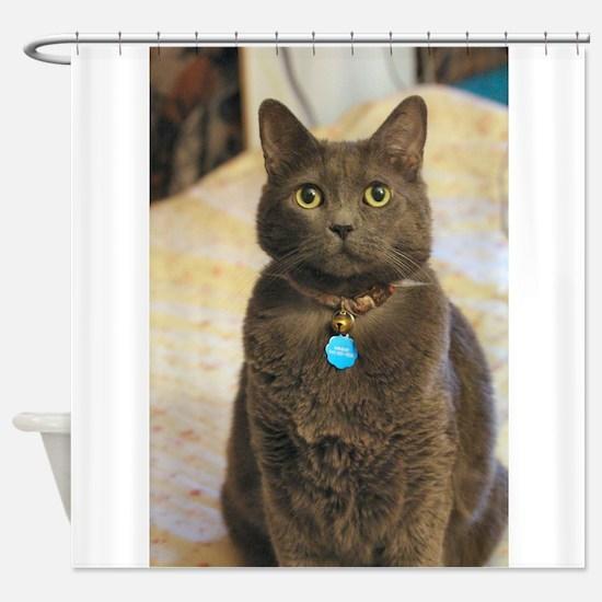 Cute Russian blue cat Shower Curtain