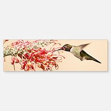 Annas Hummingbird Bumper Bumper Bumper Sticker