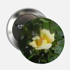 "Yellow rose 2.25"" Button (10 pack)"