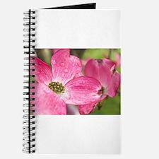 Rainy Spring Journal