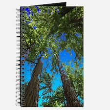 Muir Woods treetops Journal