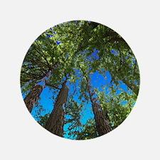 Muir Woods treetops Button