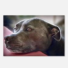 Loving Pitbull Eyes Postcards (Package of 8)