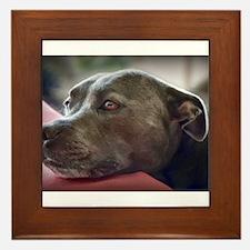 Loving Pitbull Eyes Framed Tile