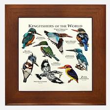 Kingfishers of the World Framed Tile