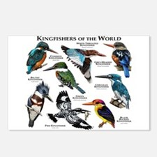 Kingfishers of the World Postcards (Package of 8)