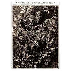Graceful Ferns Poster