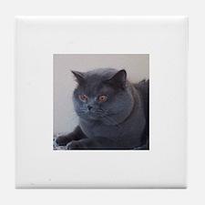 blue British Shorthair cat Tile Coaster