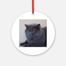 blue British Shorthair cat Ornament (Round)