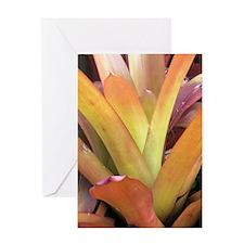 Rainbow Bromeliad Greeting Card
