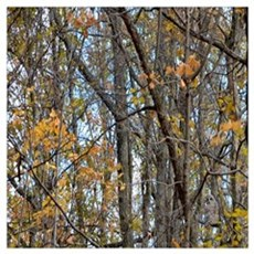 forest trees Camo Camouflage  Poster