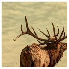 rustic western wild elk Poster