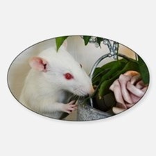Unique Pet rat Sticker (Oval)