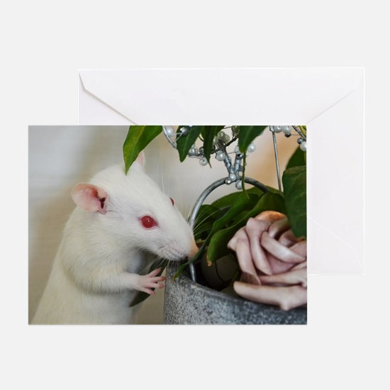 Funny Rat Greeting Card