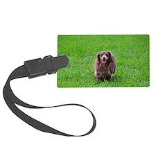 Cute Longhaired dachshund Luggage Tag