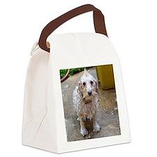 Cute Maltese poodle mix Canvas Lunch Bag