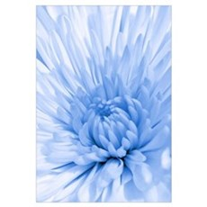 Blue Mum Canvas Art