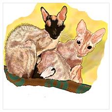 Tiger & George - Cornish Rex Cats Poster